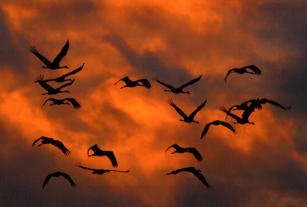 Kraniche-vor-sonnenbeleuchteten-Wolken.jpg